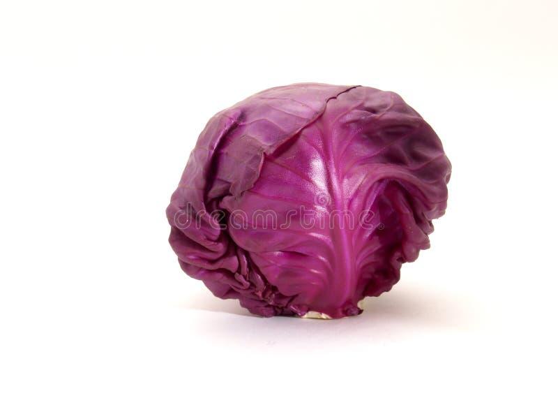 圆白菜紫色 免版税库存照片