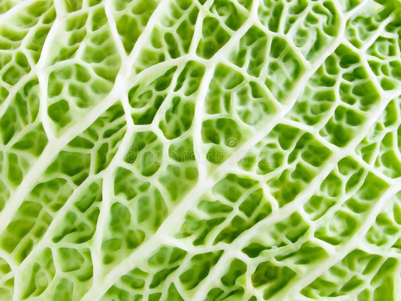 圆白菜绿色纹理 免版税库存照片