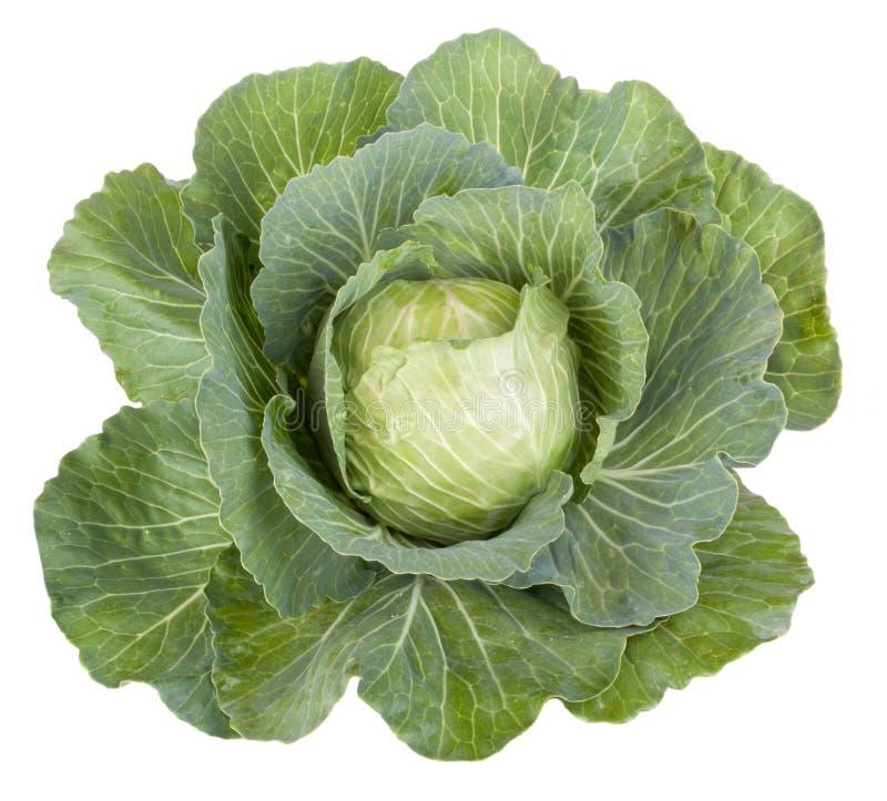 圆白菜蔬菜叶 免版税库存图片