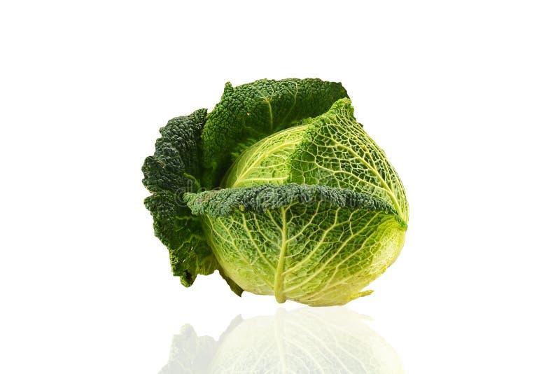 圆白菜 向量例证