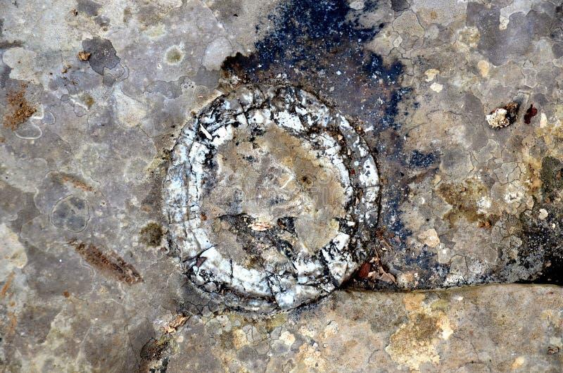 圆的几何地质结构 免版税库存照片