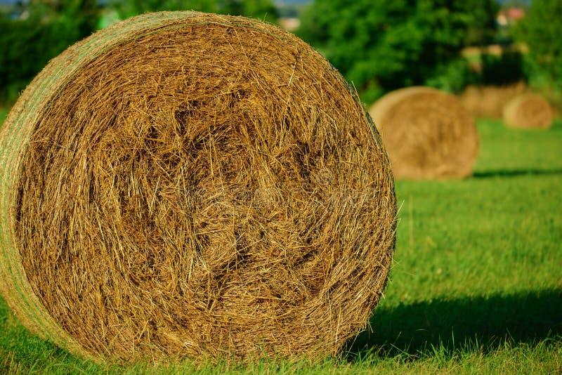 圆的大包干草和秸杆 库存图片