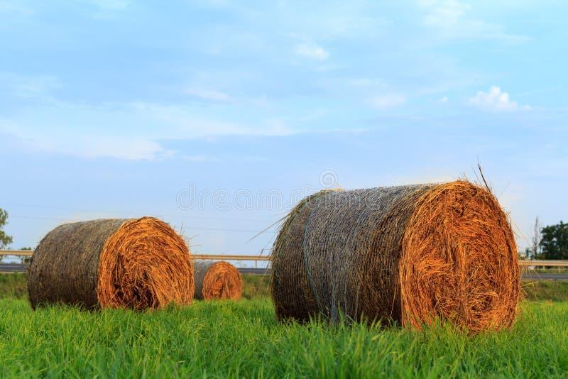 圆的干草捆在日落的被日光照射了象草的牧场地 免版税库存照片