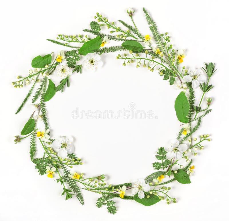 圆的框架花圈由被隔绝的春天花和叶子制成在白色背景 平的位置 库存图片