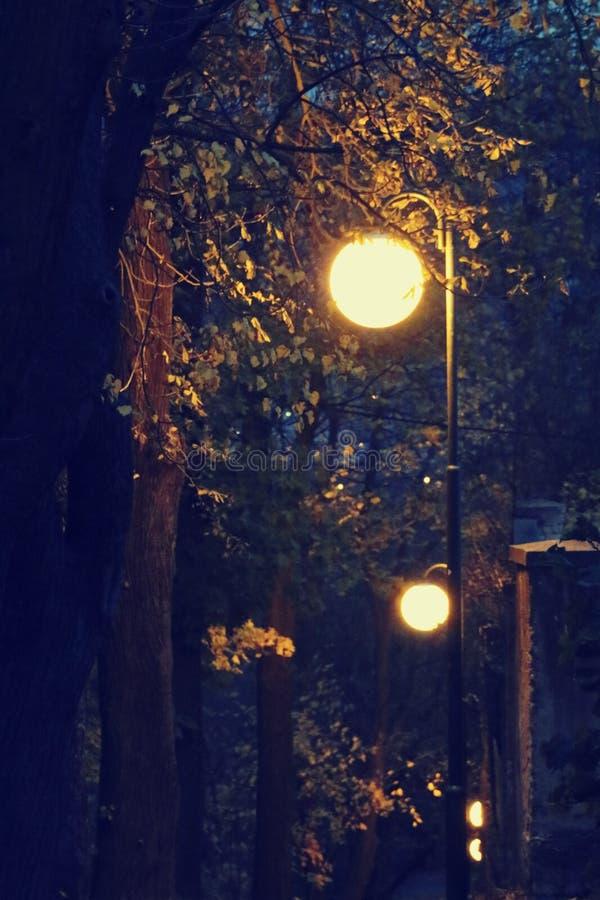 圆的灯在晚上被点燃在公园 免版税库存图片
