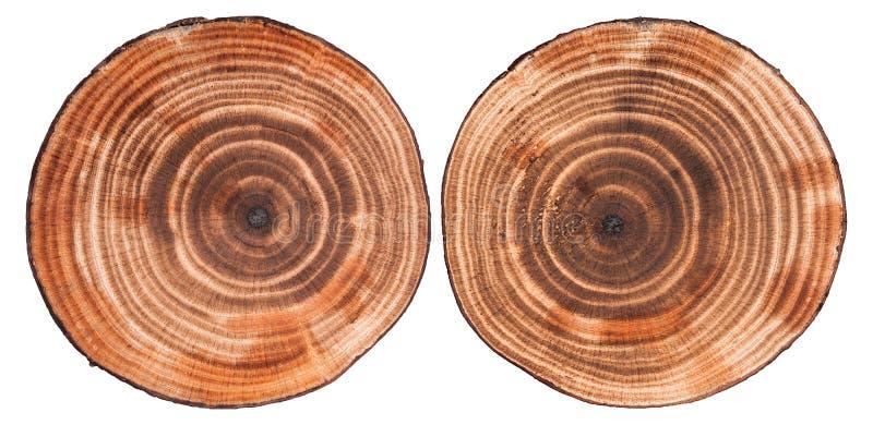 圆的裁减木头背景 免版税库存照片