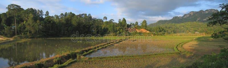 圆的ricefields 库存照片