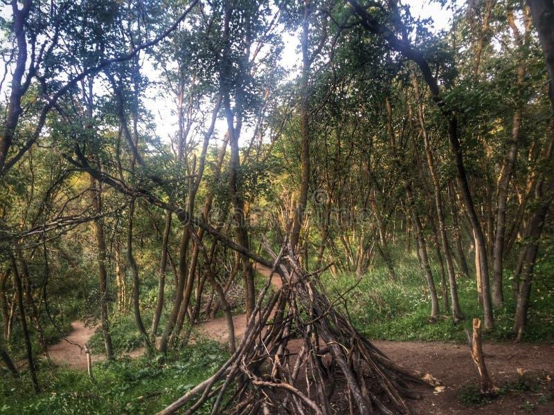圆锥形帐蓬在森林 免版税库存图片