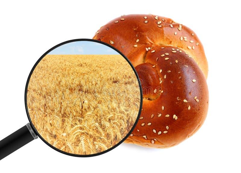 圆面包和麦田是放大镜中的产地 面包食品生产和农业 免版税库存图片