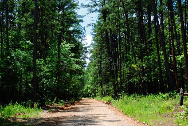 土乡下公路在有美丽的杉树的阿肯色 库存图片
