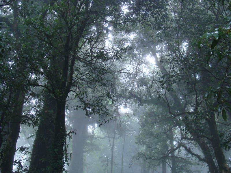 土井Intanon国家公园有薄雾的森林  免版税图库摄影