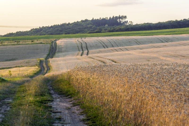 土在麦田的石渣路在日落 富有的收获概念 图库摄影