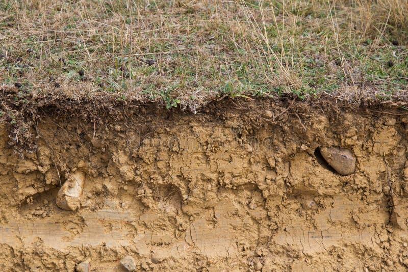 土地黏土的横断面 库存照片