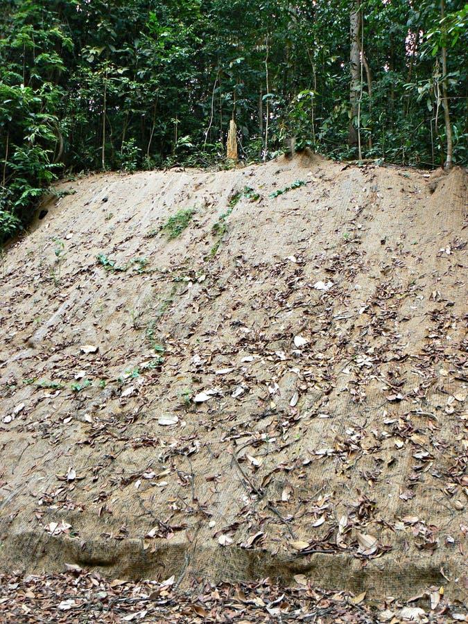 土壤侵蚀保护 库存照片