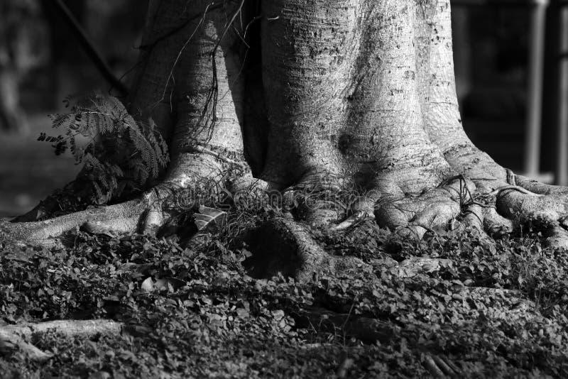 土壤侵蚀和树 免版税图库摄影