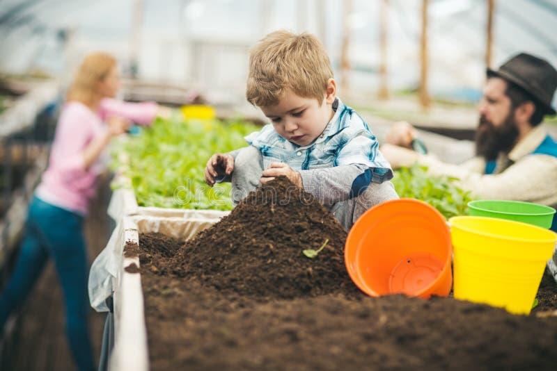 土壤准备 小男孩土壤为种植做准备 准备概念的土壤 土壤准备年轻花匠家庭 免版税图库摄影