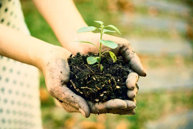 土壤和新芽 库存图片