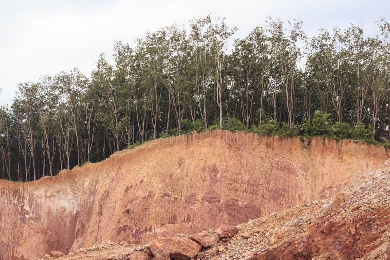 土壤的树和部分 免版税库存照片
