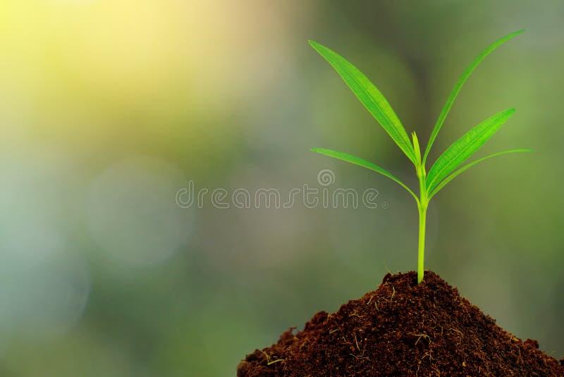 土壤的绿色植物在抽象自然背景 免版税库存图片