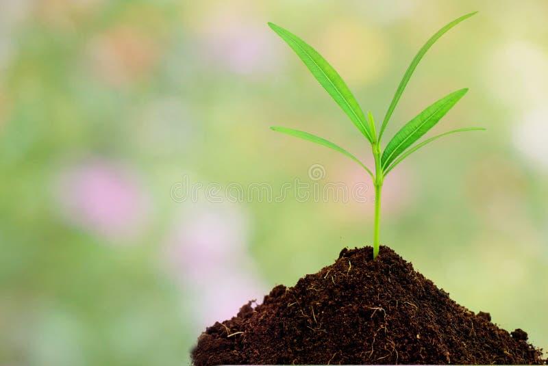 土壤的绿色植物在抽象自然背景 库存图片