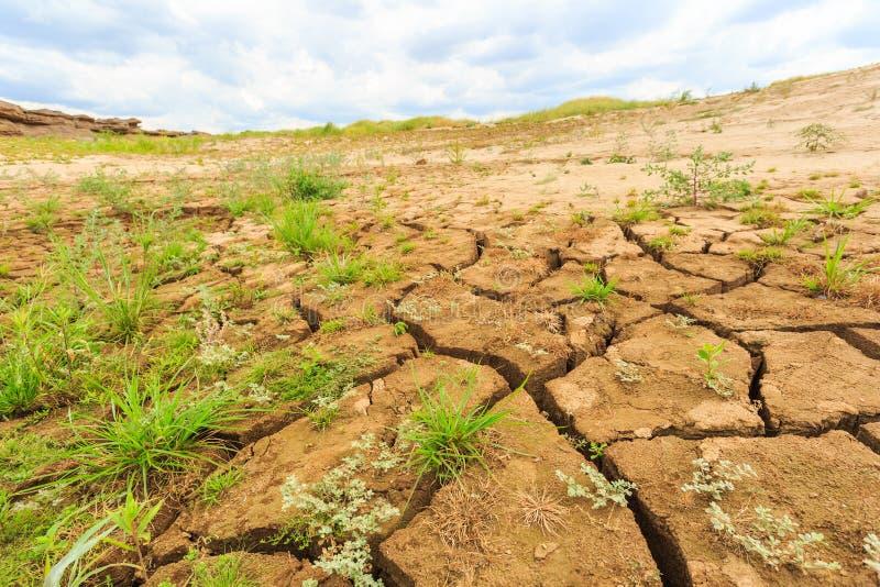 土壤表面裂缝在干旱的区域 免版税库存图片