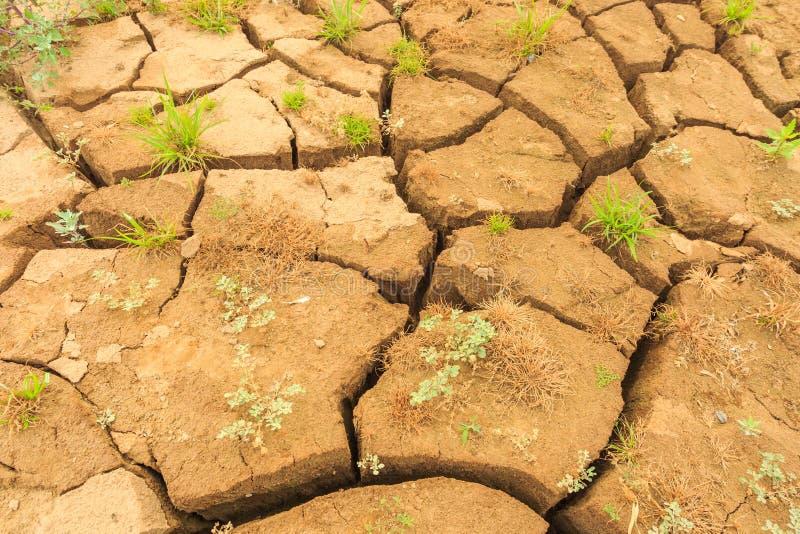 土壤表面裂缝在干旱的区域 免版税图库摄影