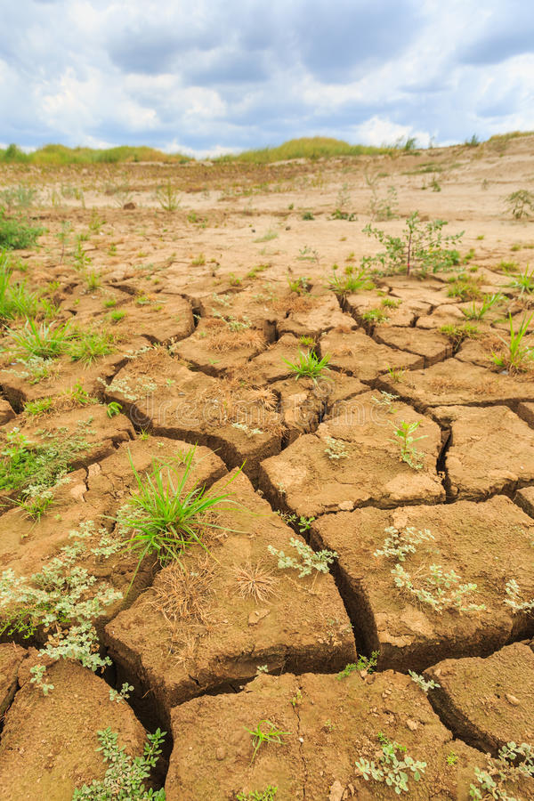 土壤表面裂缝在干旱的区域 库存照片