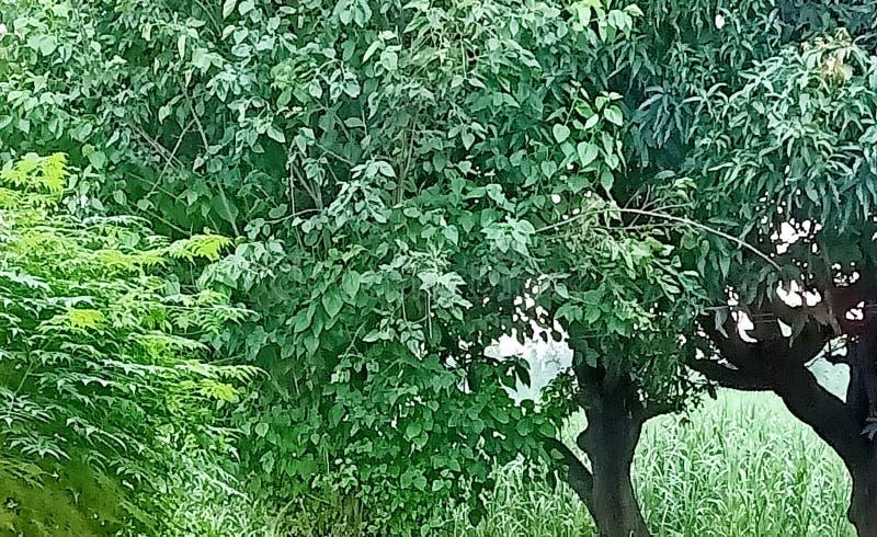 土壤路树天空植物gras自然enveronment天芒果树 免版税库存照片
