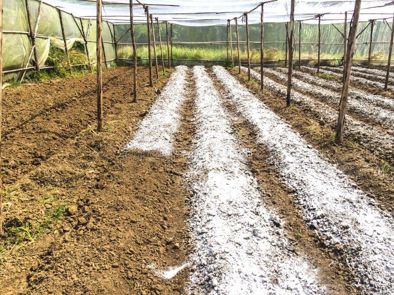 土壤适应 免版税库存照片