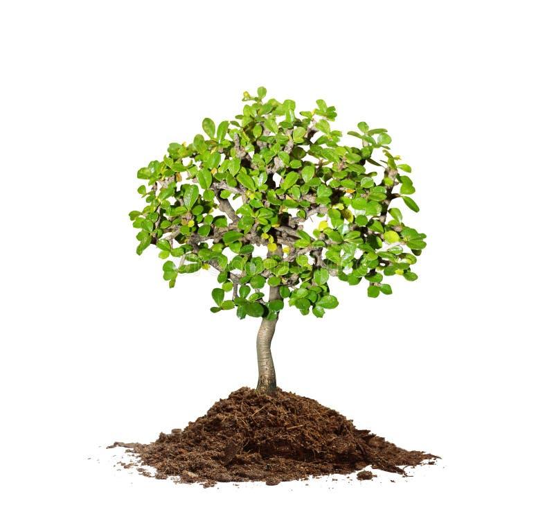 土壤结构树 免版税库存图片