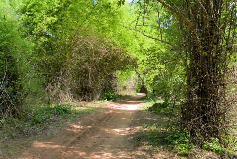 土密林路径 库存图片