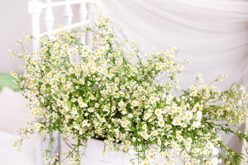 乡村风格和生态风格 斯堪的纳维亚 乡间别墅的雏菊花 在白色背景上花瓶里 芳香疗法,总和 免版税库存照片