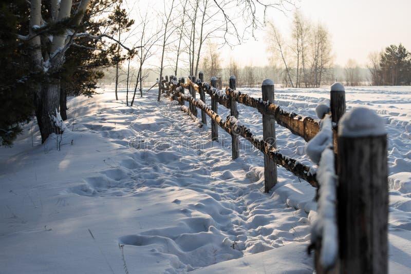 土气篱芭在乡下在用雪盖的森林里在针叶树中的明亮的冬天太阳下 免版税库存照片