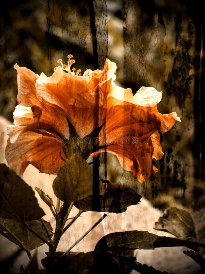 土气艺术的花 库存照片