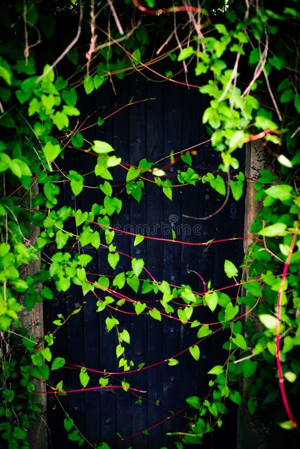 土气黑木门入口长满与藤 免版税图库摄影