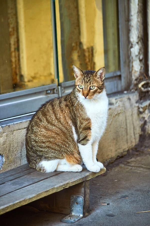 土耳其伊斯坦布尔街上的猫 库存照片