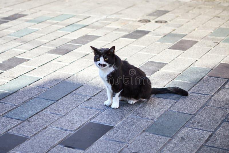 土耳其伊斯坦布尔街上的猫 库存图片