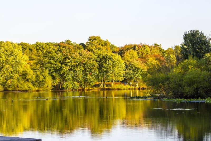 土耳其在秋天期间的Swamp湖 库存照片