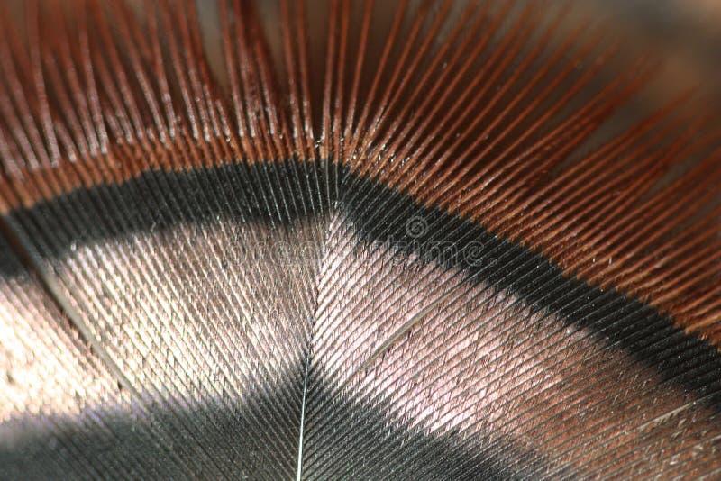 土耳其羽毛 免版税图库摄影