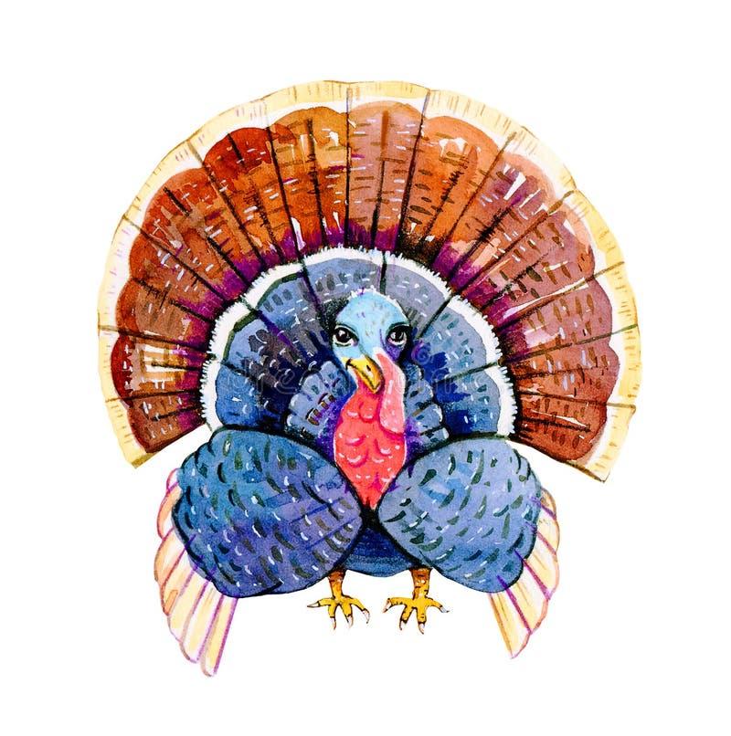 土耳其鸟 手拉的水彩风格化卡通人物例证为感恩节 向量例证