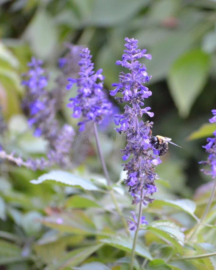 土蜂休息 免版税库存照片