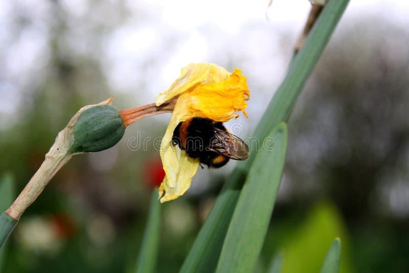 土蜂在一好日子寻找 图库摄影