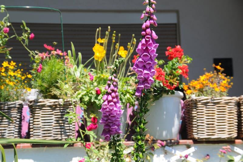 土蜂在一温暖的天外面在夏天庭院里 免版税库存照片