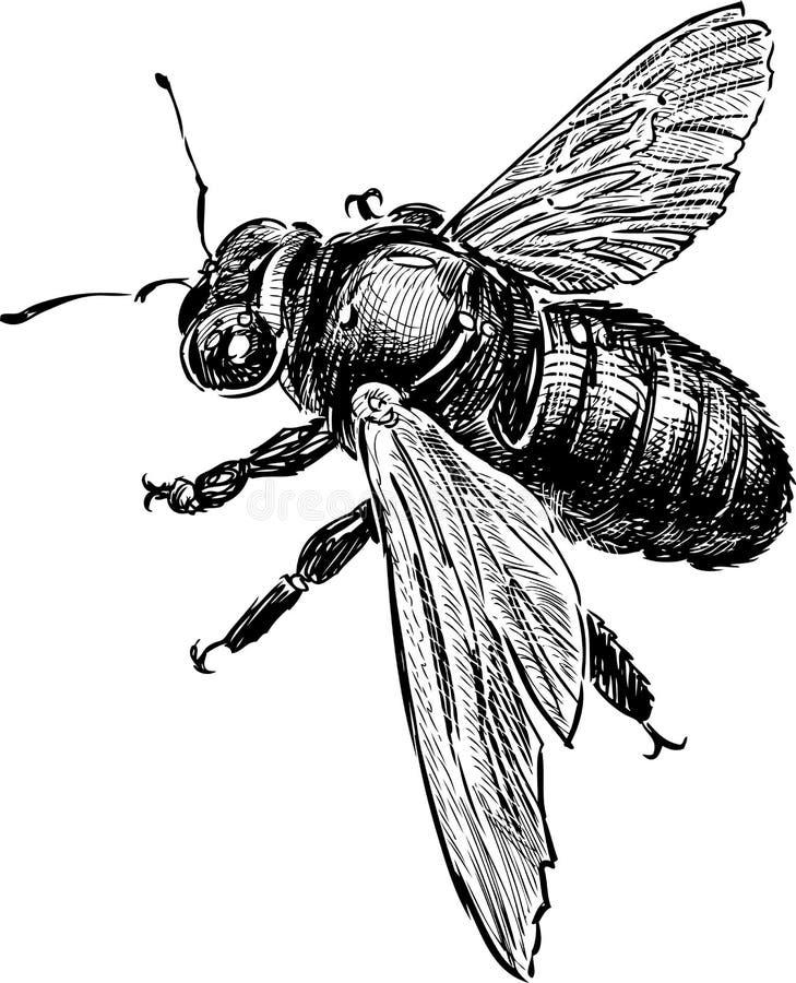 土蜂的剪影 皇族释放例证