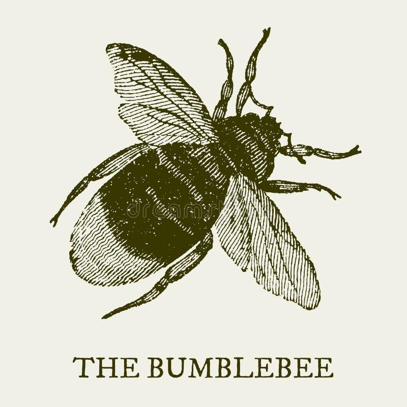 土蜂 在葡萄酒木刻板刻以后的例证 库存例证