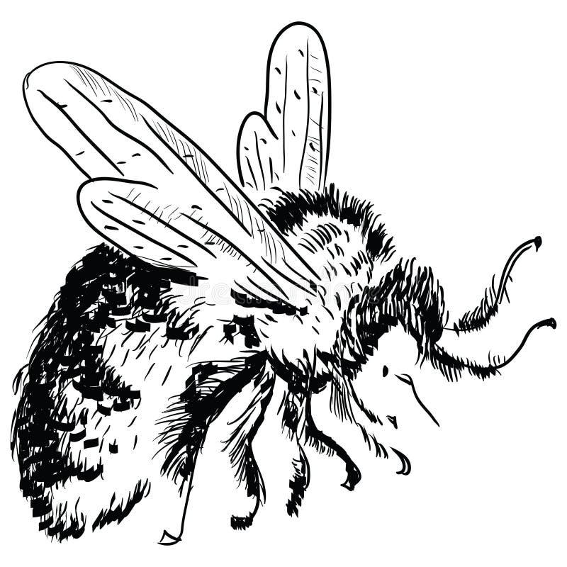 土蜂 向量例证