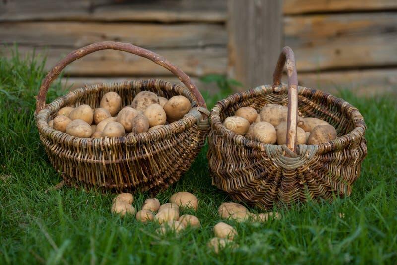 土豆两个篮子  免版税库存图片