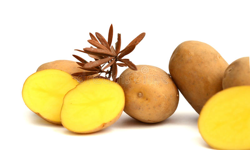 土豆六 免版税库存照片