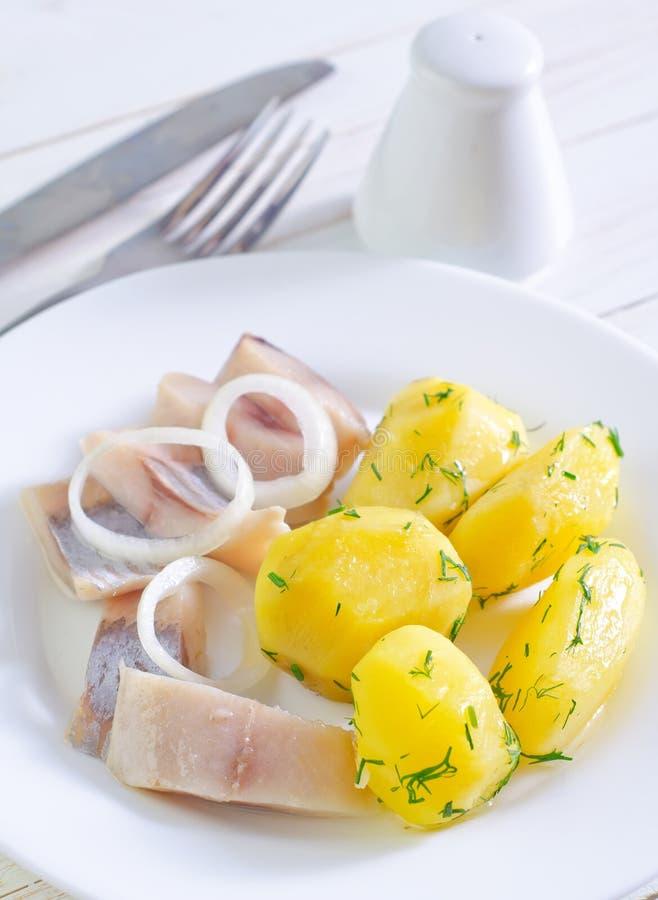 土豆和鲱鱼 免版税库存图片