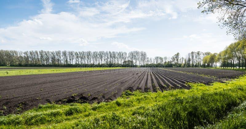 土豆土坎在一个晴天春天 库存图片